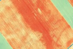 ALTUM-Flug_75-75_NDVI_0-1_Detail2